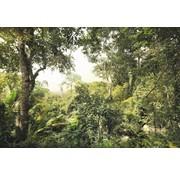 Komar Dschungel Vlies Fotobehang 368x248cm