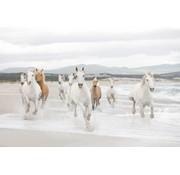 Komar White Horses Fotobehang 368x254cm