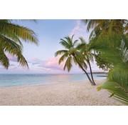 Komar Paradise Morning Vlies Fotobehang National Geographic 368x248cm