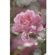 Komar Bouquet Fotobehang 184x254cm