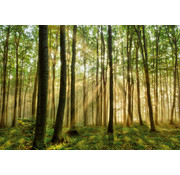 Papermoon Forest in the Morning Vlies Fotobehang 350x260cm