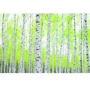 Papermoon Berkenbos Vlies Fotobehang 250x180cm