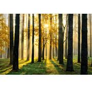 Papermoon Bos in de zon Vlies Fotobehang 250x180cm