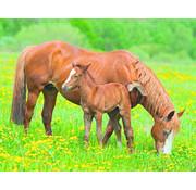 Papermoon Paarden Vlies Fotobehang 250x180cm