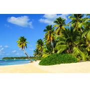 Papermoon Exotisch Palmenstrand Vlies Fotobehang 350x260cm