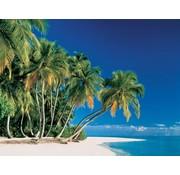 Papermoon Tropische Palmbomen Vlies Fotobehang 350x260cm