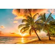 Papermoon Barbados Palmenstrand Vlies Fotobehang 350x260cm