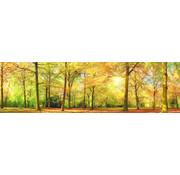 Papermoon Herfst Bos Panorama Vlies Fotobehang 350x100cm