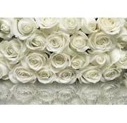 Komar A la Rose Fotobehang 368x254cm
