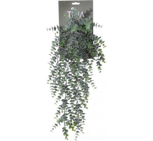 Eucalyptus hanger l54cm groen pdr h