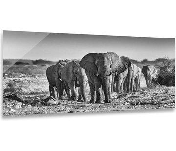 ter Halle® Glasschilderij 80 x 160 cm | Elephants black white
