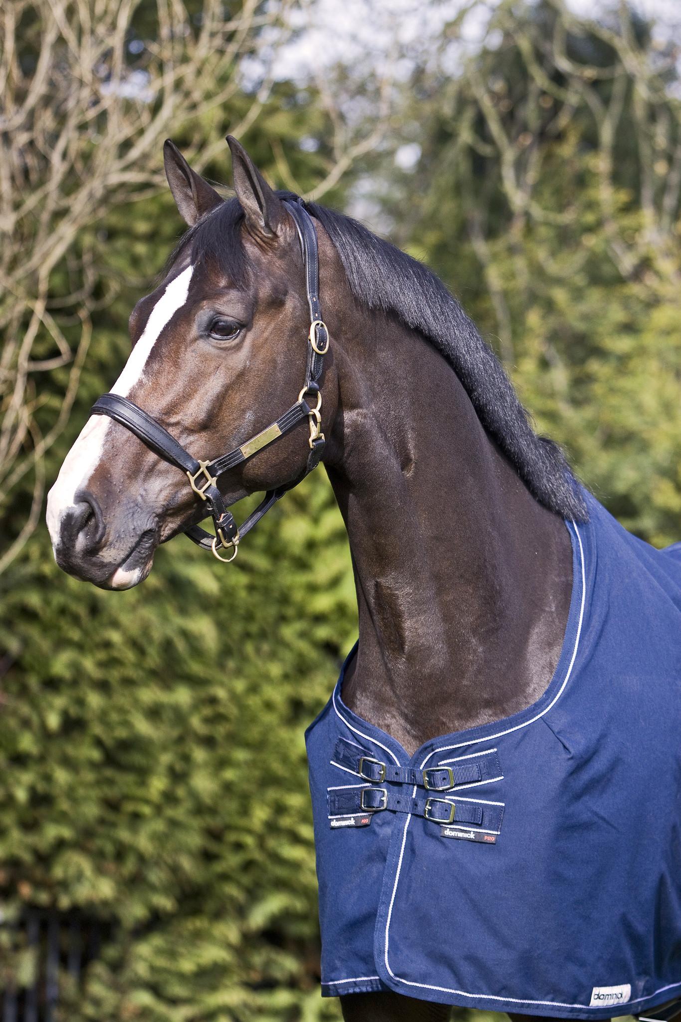 7 tips voor een perfect geschoren paard