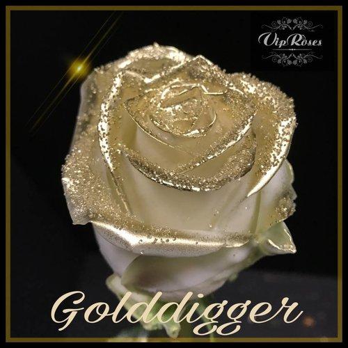 Rozen.nl Golddigger R-460