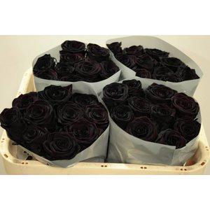 Rozen.nl 100 zwarte rozen