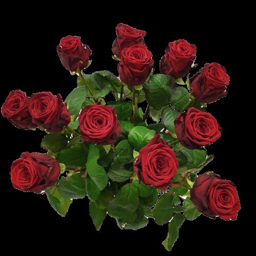 Rozen.nl 12 Rote, Weiß oder Rosa Rosen + Karte angebot
