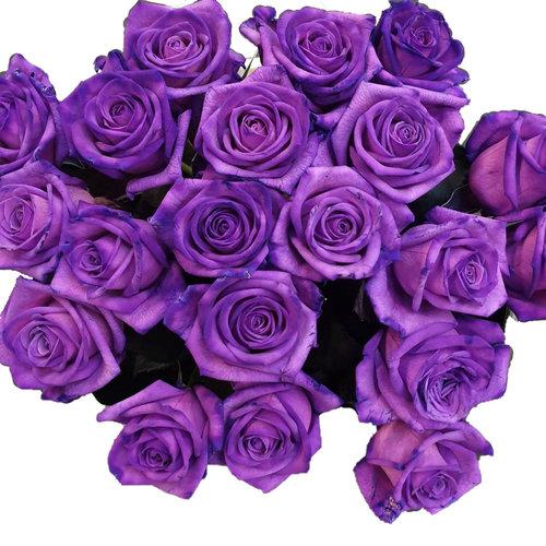 Rozen.nl Lila rosen