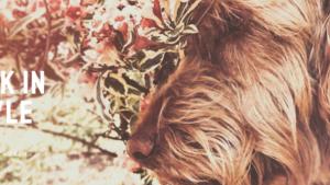 Fijne moederdag, het beste cadeau voor een ' dog mom'