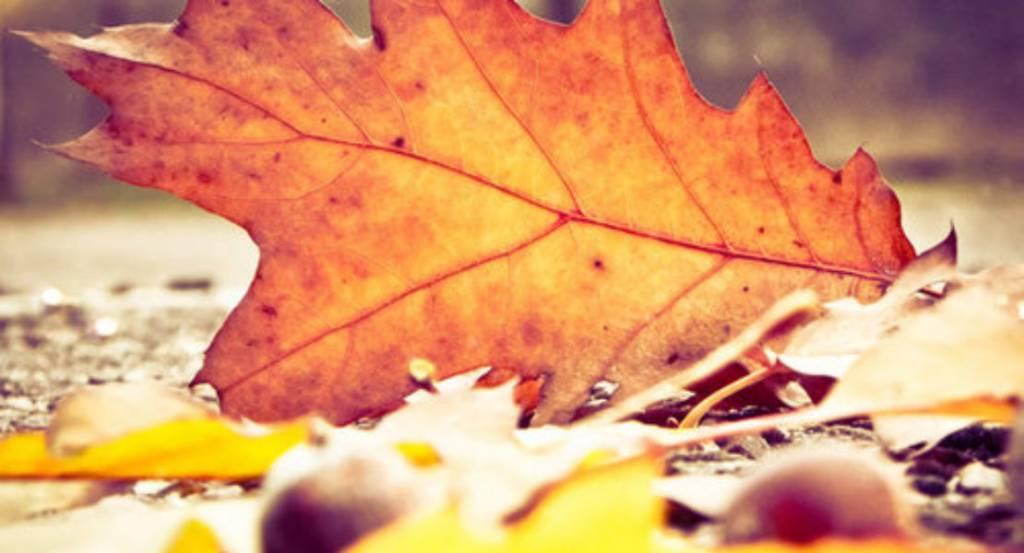 Op naar de herfst