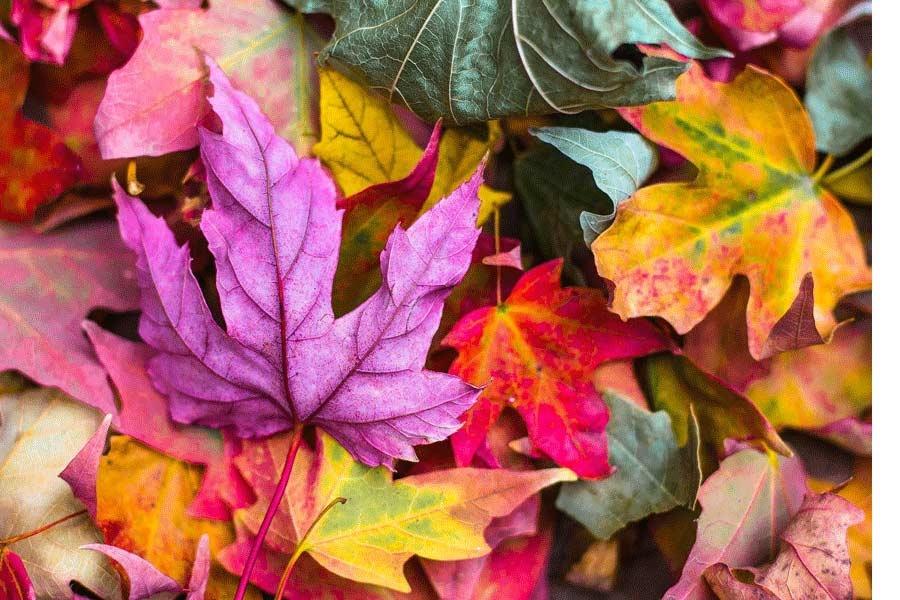 Yes, de herfst komt er weer aan! | Design85