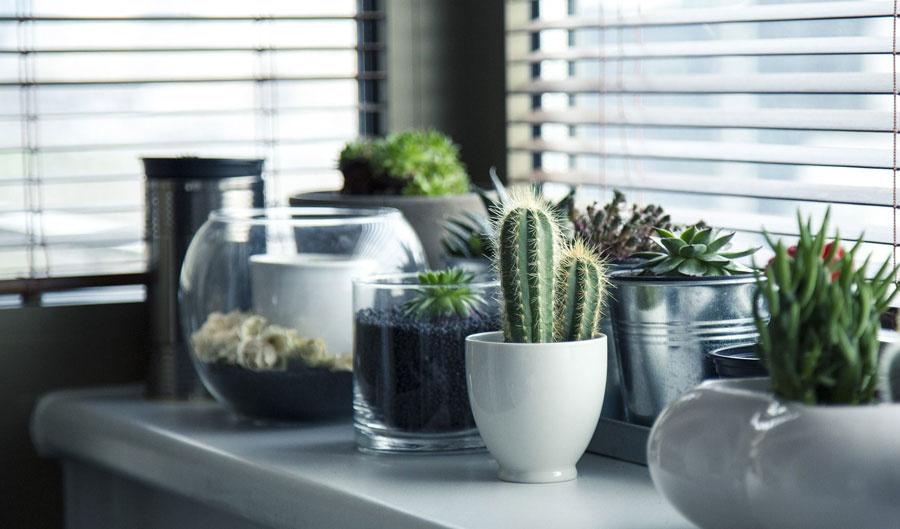 Cactussen en Vetplanten industrieel interieur