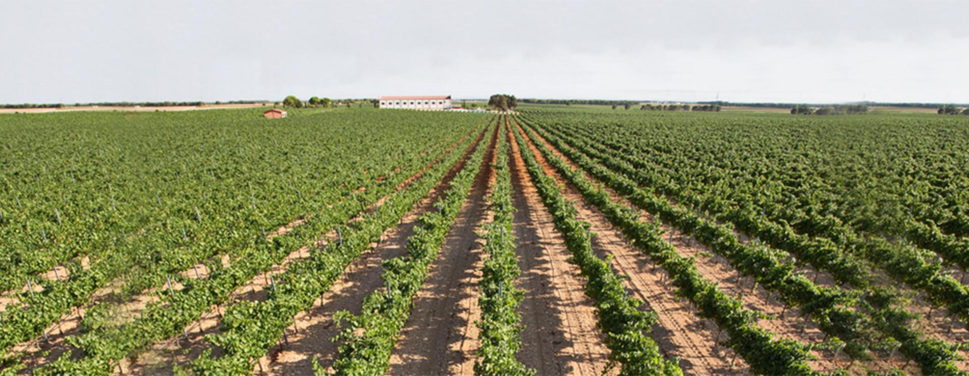Vino Tierra de Castilla