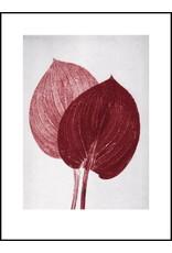 Pernille Folcarelli Hosta Scarlet 30x40cm
