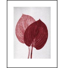 Pernille Folcarelli 30 x 40cm Paper Hosta Scarlet Print