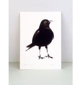 Maartje van den Noort A4 Paper Blackbird Art Print