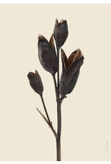 "Liljebergs poster ""Iris"" 30x40cm"