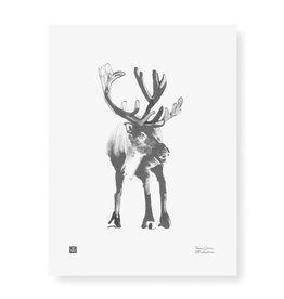 Teemu Jarvi Poster 'Reindeer'