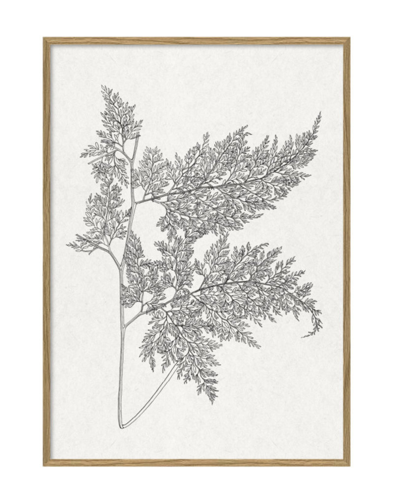 The Dybdahl Co Poster 'Ferns |'