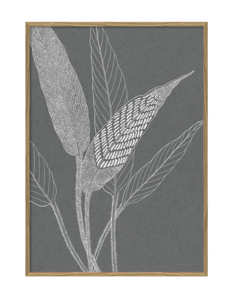 The Dybdahl Co Poster 'Ferns ||||'