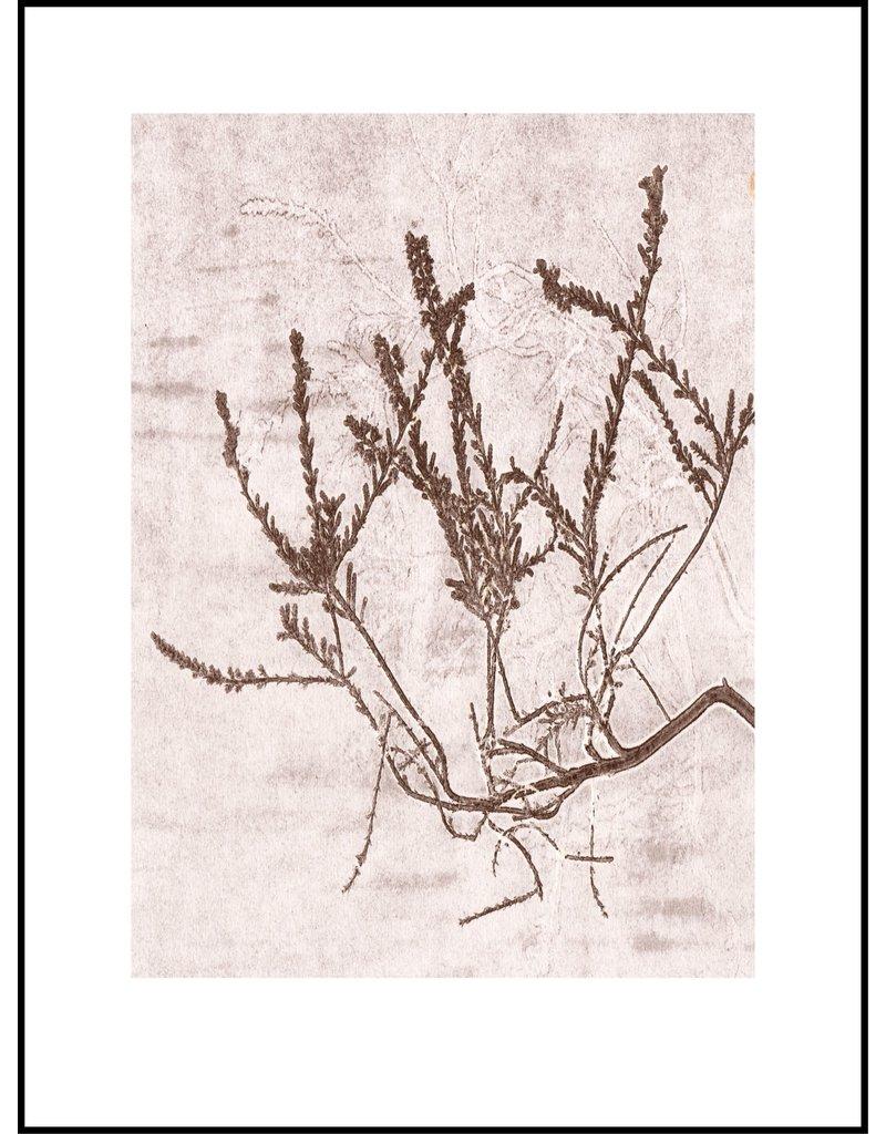 Pernille Folcarelli Poster 'Heather Cacao'