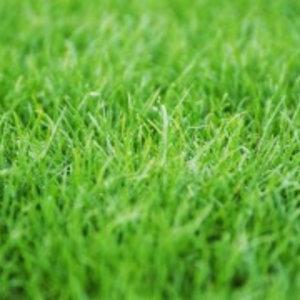 Eurocompost garden products Grondverbetering Los afgehaald 1m³