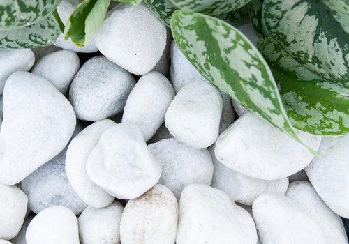 Carrara Grind