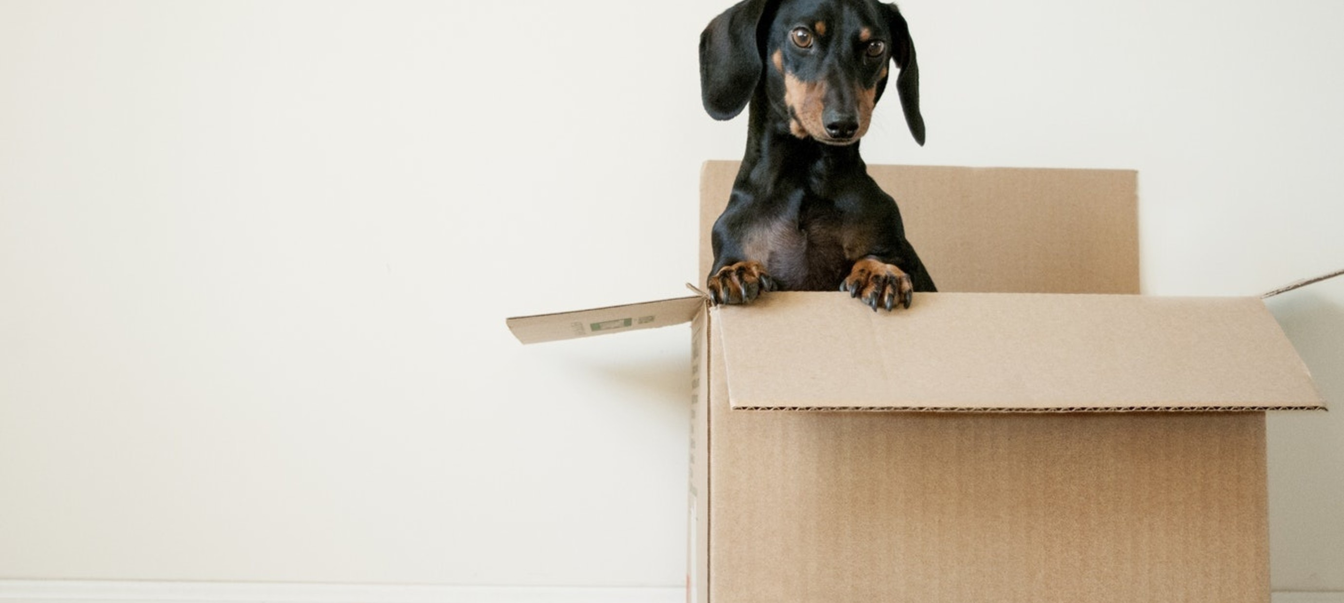 Hoe je verhuisstress kunt voorkomen