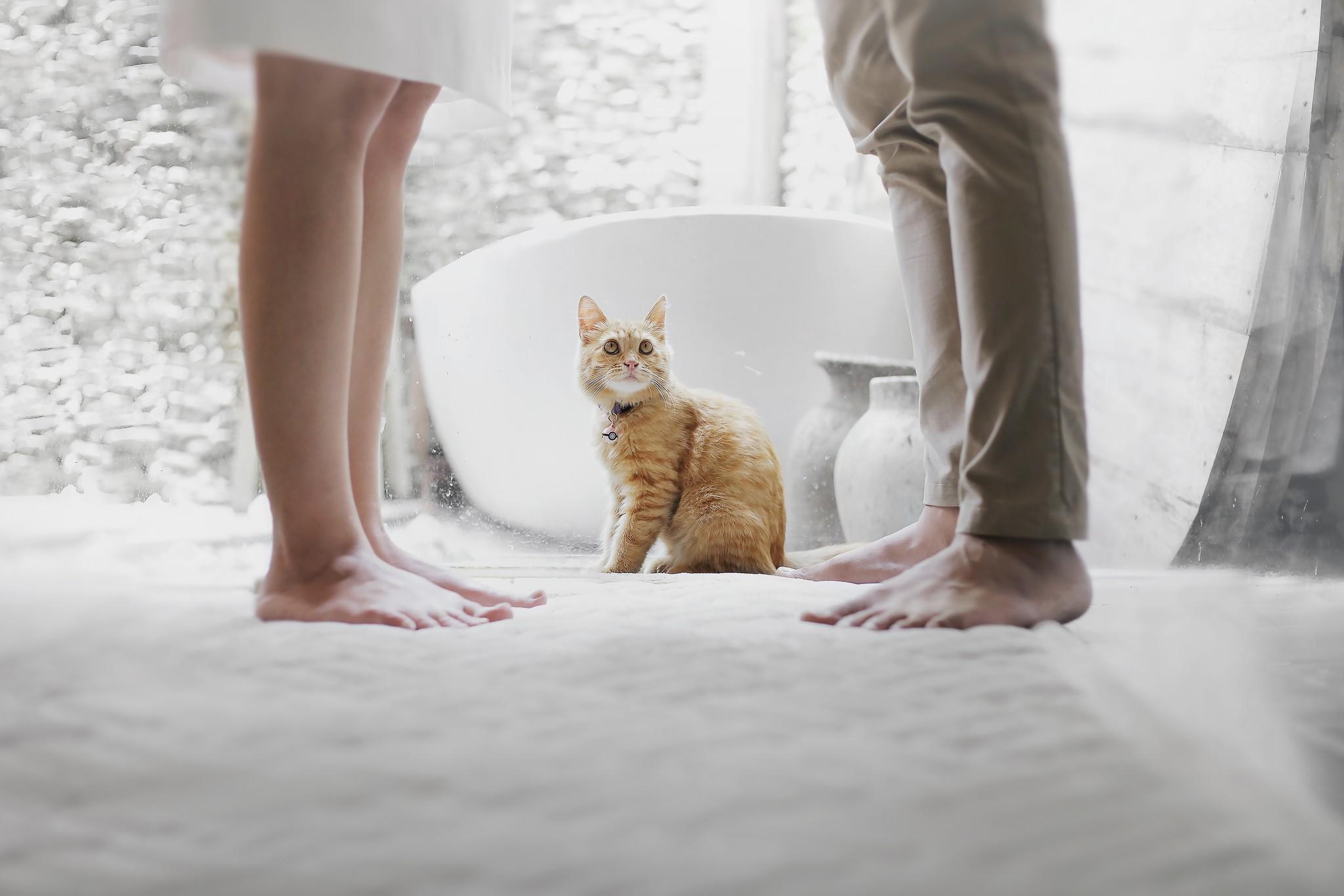 Hoe zit het met jullie huisdier bij echtscheiding?