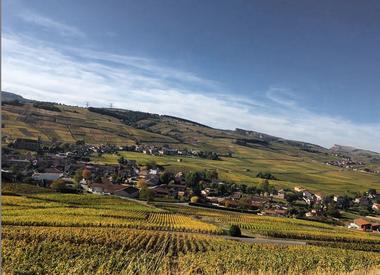 Burgund