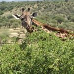 Roof of Africa Adventure - 21/09/19 to 02/10/19