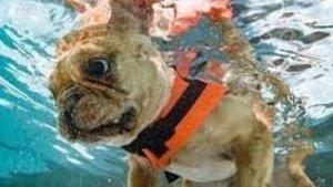 Swimming in Lockdown