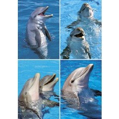 A4 Reuzewenskaarten dolfijnenkoppen