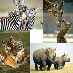 Wilde dieren  Reuzewenskaarten - A4