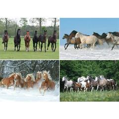 A4 Reuzewenskaarten dravende paarden