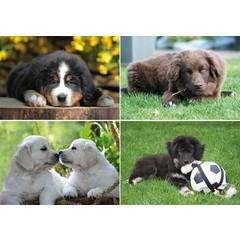 A4 Reuzewenskaarten jonge hondjes