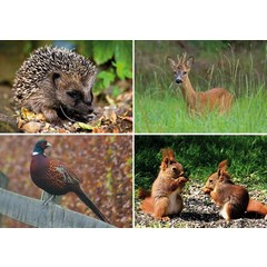 A4 Reuzewenskaarten bosdieren