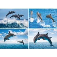 A4  Reuzewenskaarten dolfijnen