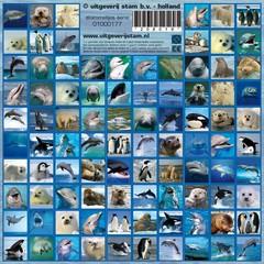 Stammetjes Sealife - Stickers