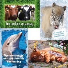 A4 Reuzewenskaarten  dieren met felicitatie