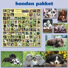 Kaarten- en sticker pakket honden
