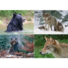 A4 Reuzewenskaarten Noord Europees wild